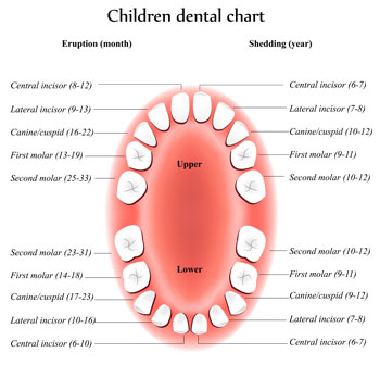 Tooth Eruption Chart - Pediatric Dentist in Pompton Lakes, NJ